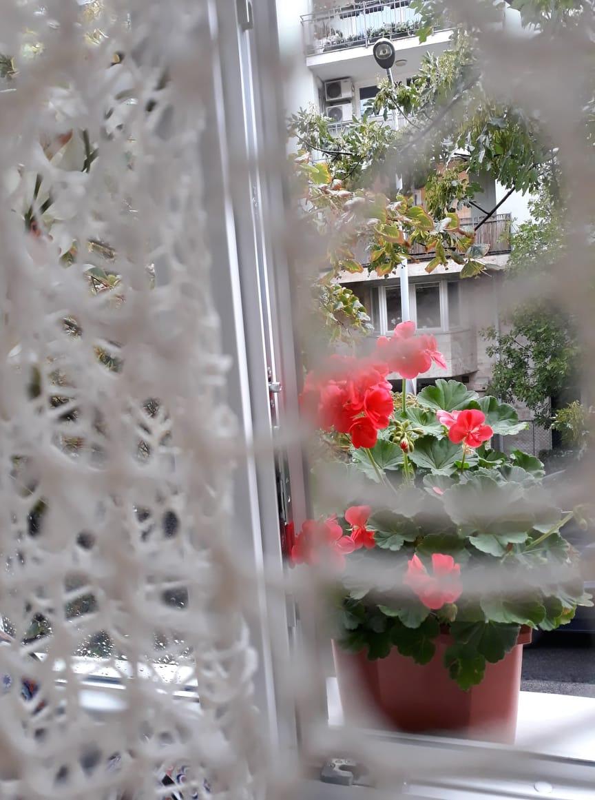függöny mögül