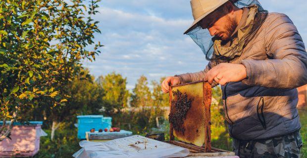 A dühös méhek fehérjékben gazdagabb mérget termelnek
