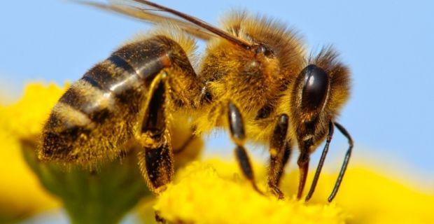 Megszúrt egy méh a péniszemben