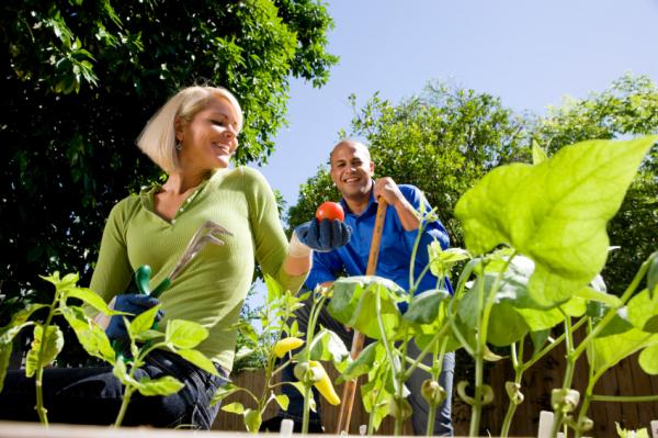 A biokertészkedés 12 alapszabálya