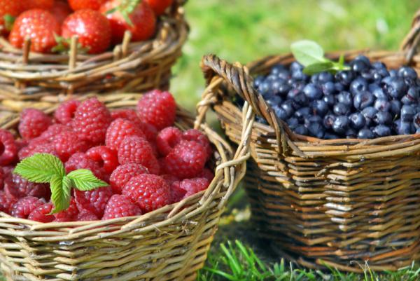 MIND-diétával a demencia ellen