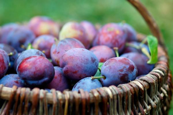 A szilva jótékony hatásai - Fűben-fában orvosság