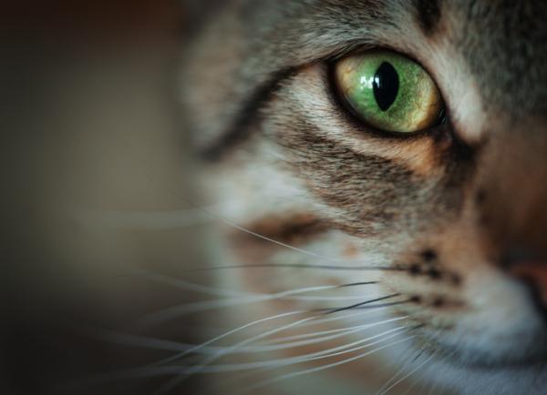 Macskája van? Lehet, hogy skizofrén!