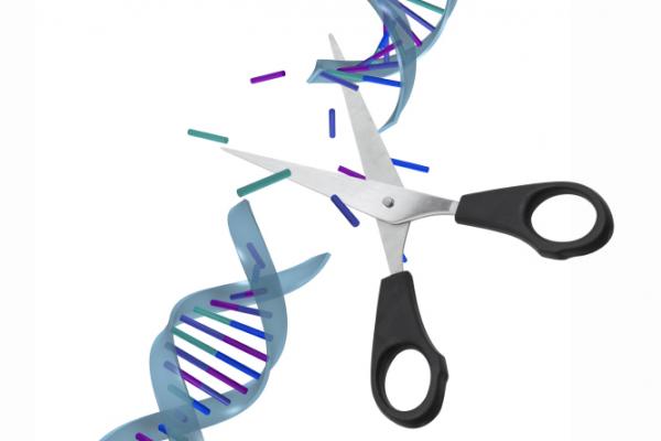 Génszerkesztéssel gyógyítják a leukémiát