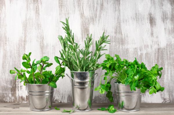 5 gyógyító fűszernövény