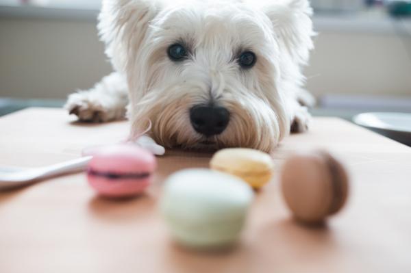 Ezért ne adjunk csokit a kutyának!