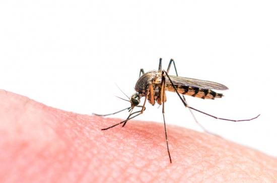 Globális egészségügyi vészhelyzet a Zika miatt