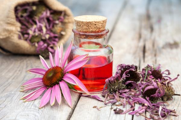 Gyógynövények a tavaszi megfázás ellen
