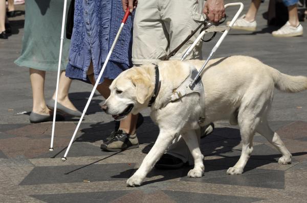 Nekik nem csak társ, hanem az élet a kutya
