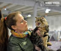 Mi a teendő várandósság alatt, ha cicánk van?