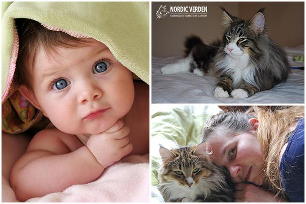 Baba vagy macska - Tényleg választanunk kell?
