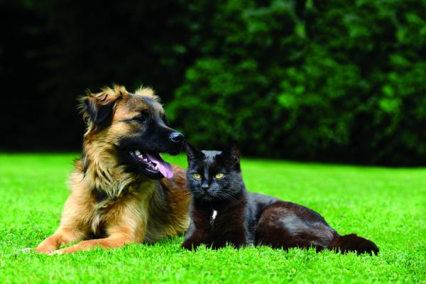 Kullancsos betegségek kutyákban és macskákban