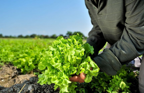 5 tipp a zöldebb étrendhez