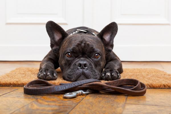A kutyák alvás alatti agytevékenységét vizsgálták kutatók