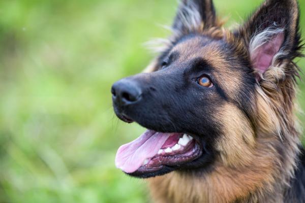Befolyásolja a kísérleteket, hogymásképp látnak a kutyák, mint az emberek