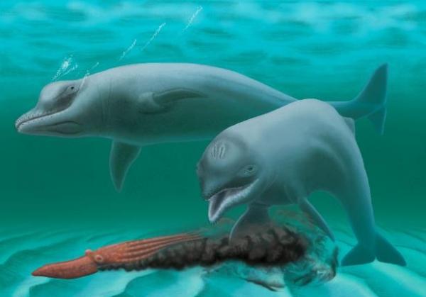Apró delfinfajt fedeztek fel a kutatók