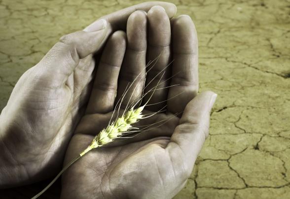 815 millió ember éhezik a világban