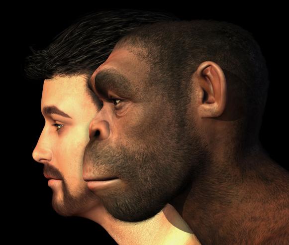 A neandervölgyi ember agya lassabban fejlődött