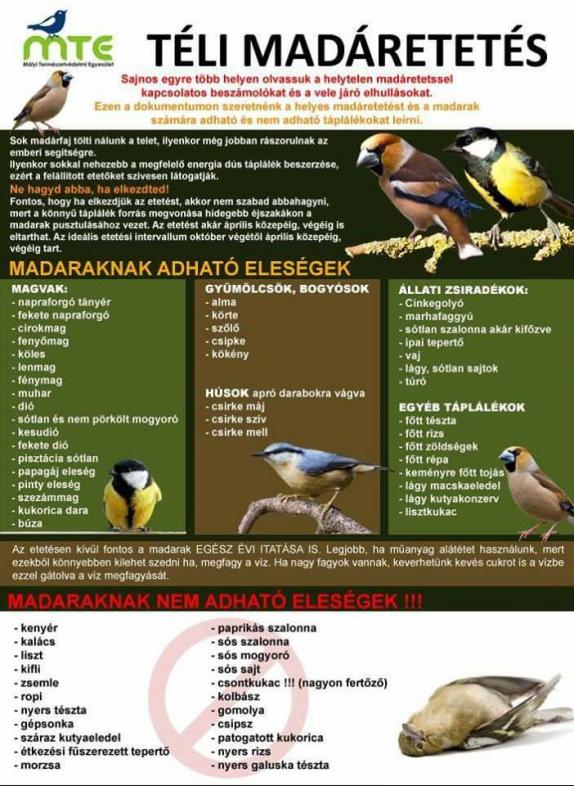 A helyes madáretetés
