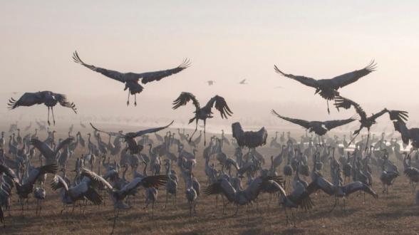 Több millió évvel korábban kezdődött meg a madarak