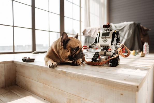 A kutyákról mintázzák a robotok reakcióit?