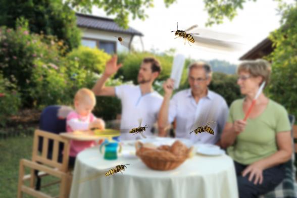 A rovarméregallergia súlyos reakciói