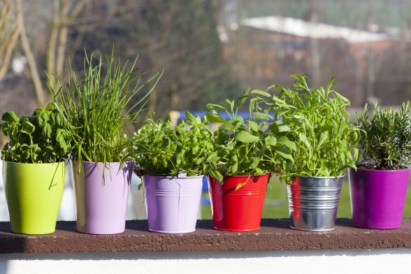 Konyhakerti balkonnövények