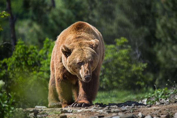 A három barátnő: A medve árnyéka