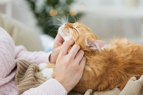 A cicákat is kell féregtelíníteni, különben mi is megbetegedhetünk