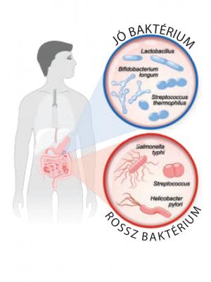 A jó probiotikum-választás szempontjai