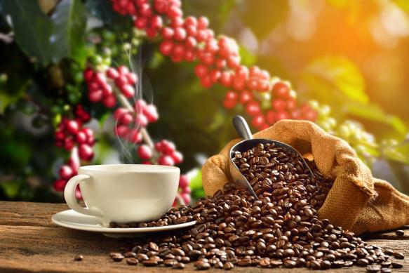 A szűrt kávé a legegészségesebb
