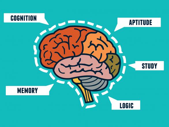 Kutatások az intelligenciát befolyásoló tényezőkről