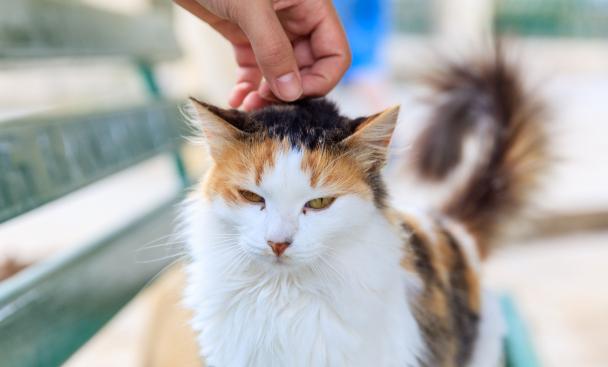 12 év után került elő a nyaraláson elveszett cica