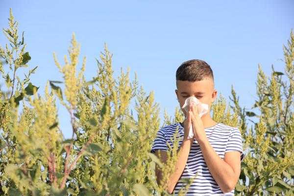 A parlagfű-allergia tünetei: bárkinél jelentkezhet