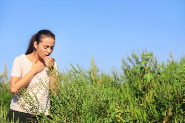 Már májusban gondoljunk a parlagfű allergiára
