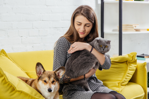 A házi állatok gyakran elkapják a fertőzést