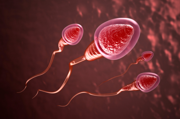 Hogyan választódnak ki a hibás spermiumsejtek?