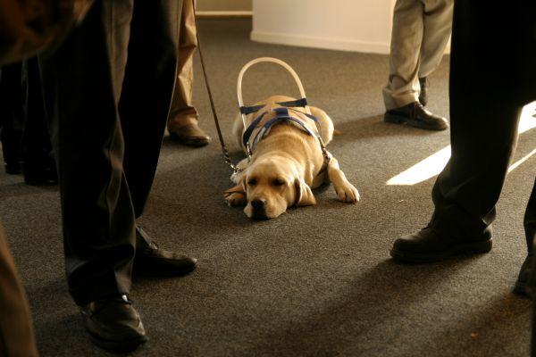 Húszezer magyar fehér bottal - Kutyák a vak emberekért