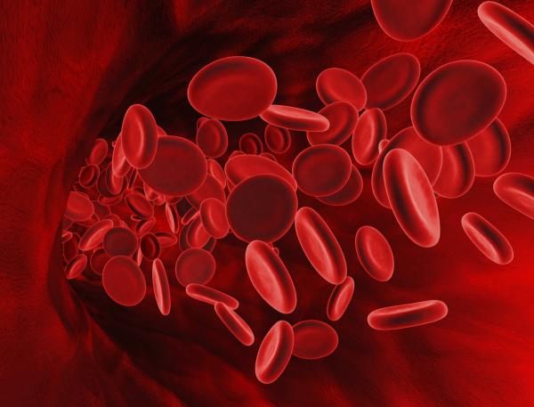 Hemofília - Nem gyógyítható, de karbantartható