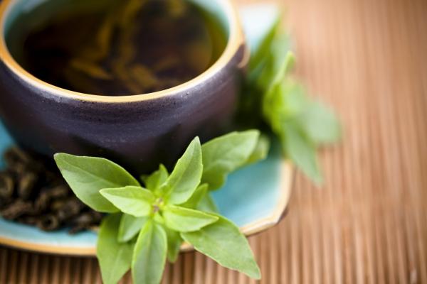 Teák mentából, gyógyító porok rozmaringból