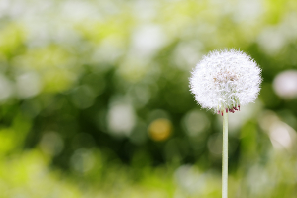 Megoldás az allergiára: immunterápia