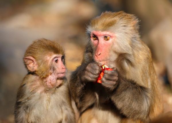 A társadalmi státusz és a gének kapcsolata