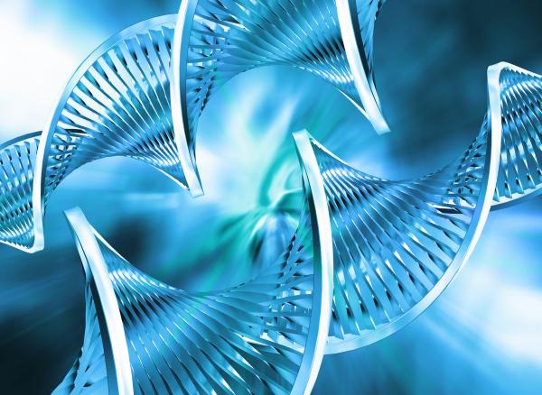 Őssejt-transzplantáció - Fajtái és hatásai 2. rész