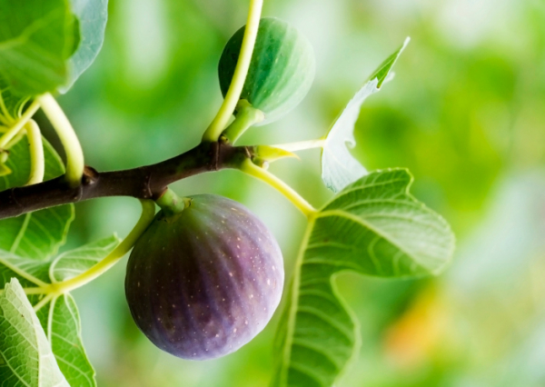Hízókúra - Ételek, amelyek vonzzák a kilókat!