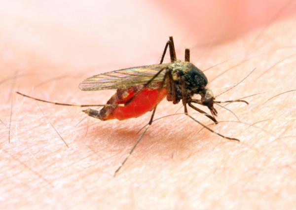 Óriási szúnyoginvázió közeleg!
