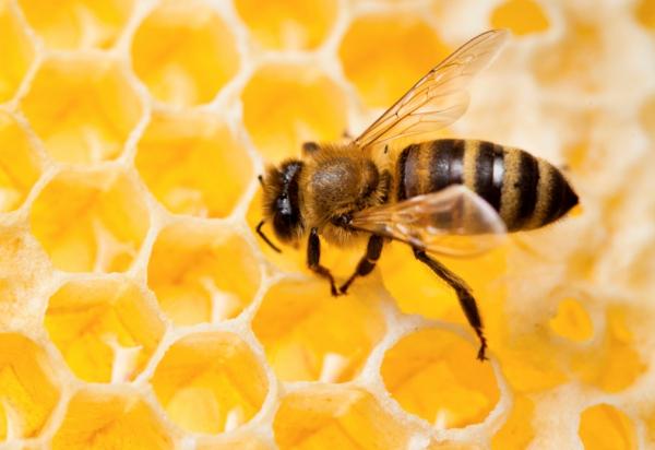 Csodatévő méz