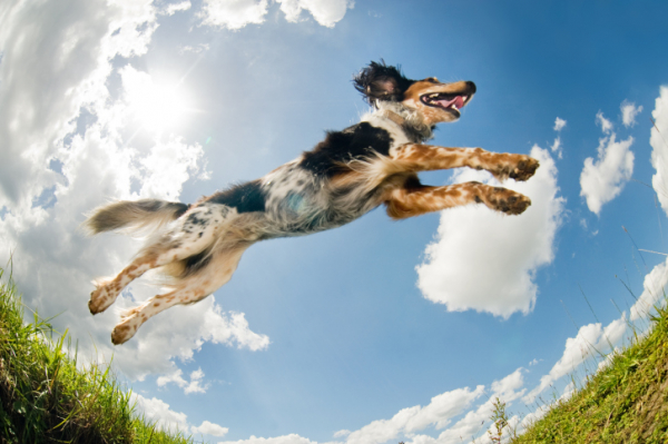 Kutyakereső alkalmazást fejlesztettek ki okostelefonra