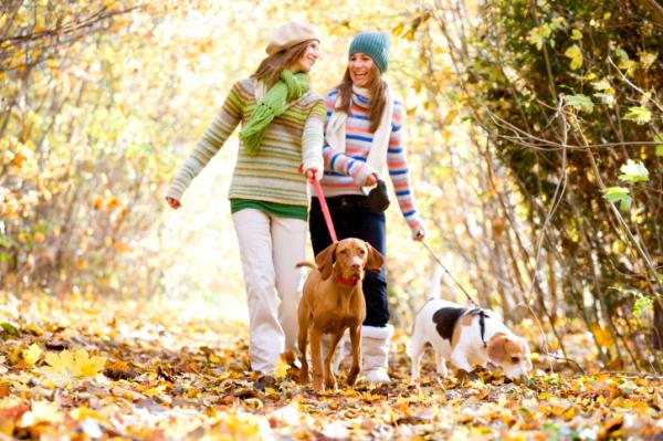 Maradj fitt és egészséges ősszel is!