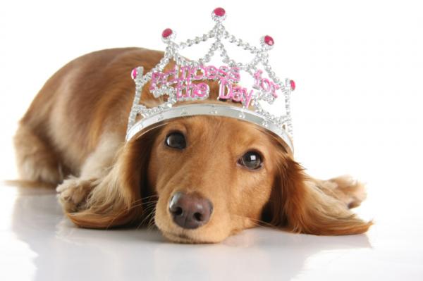 Bélszín és csirkemell a királyi kutyák eledele