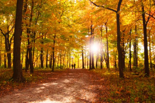 Erdők és a vitaminok